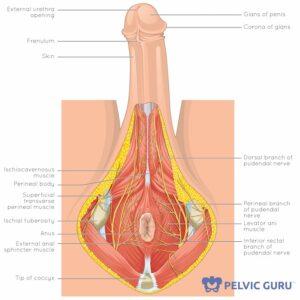Head very sensitive penis Penis irritation
